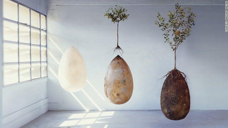 Memorial Cremation Tree Pod Option
